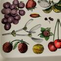 Piero Fornasetti tray - picture 2